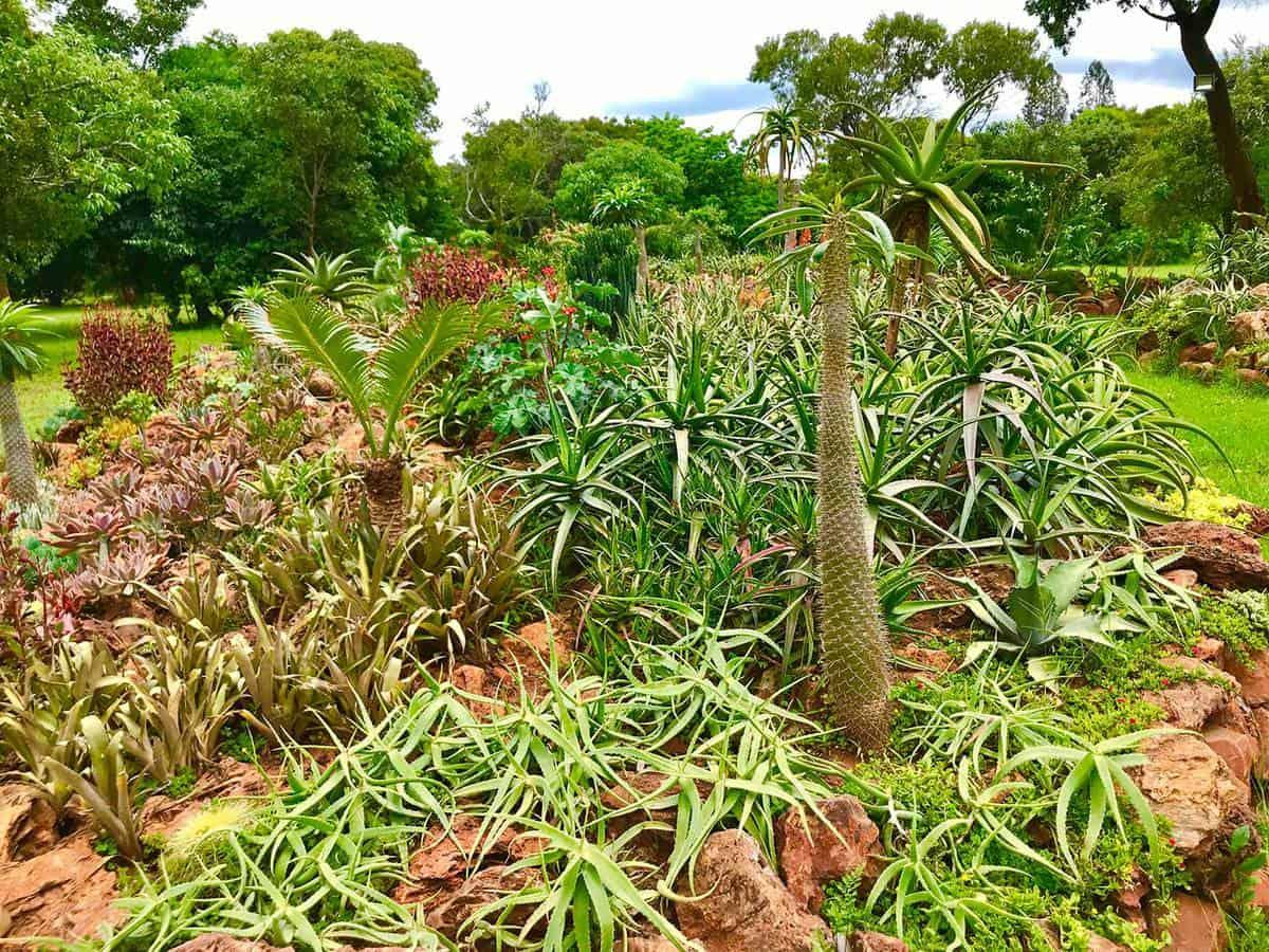 Wild cactus aloe plants bush
