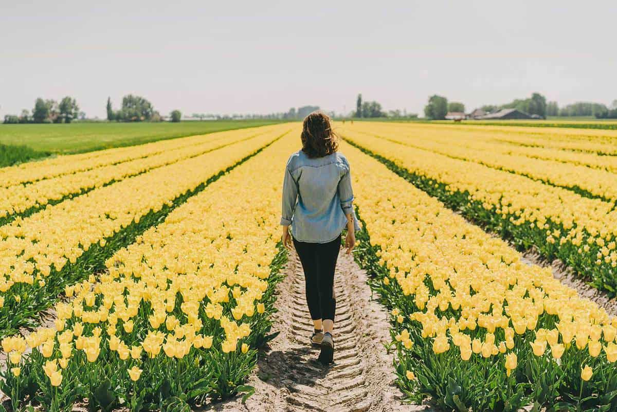 Woman walking among yellow tulips on the field
