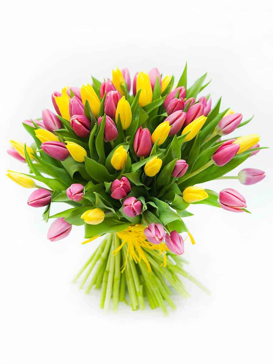Yellow-and-pink-tulips