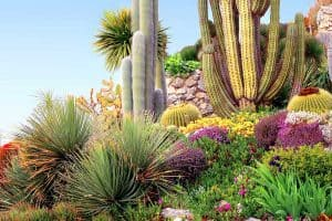 68 Cactus Landscaping Ideas That Will Inspire You