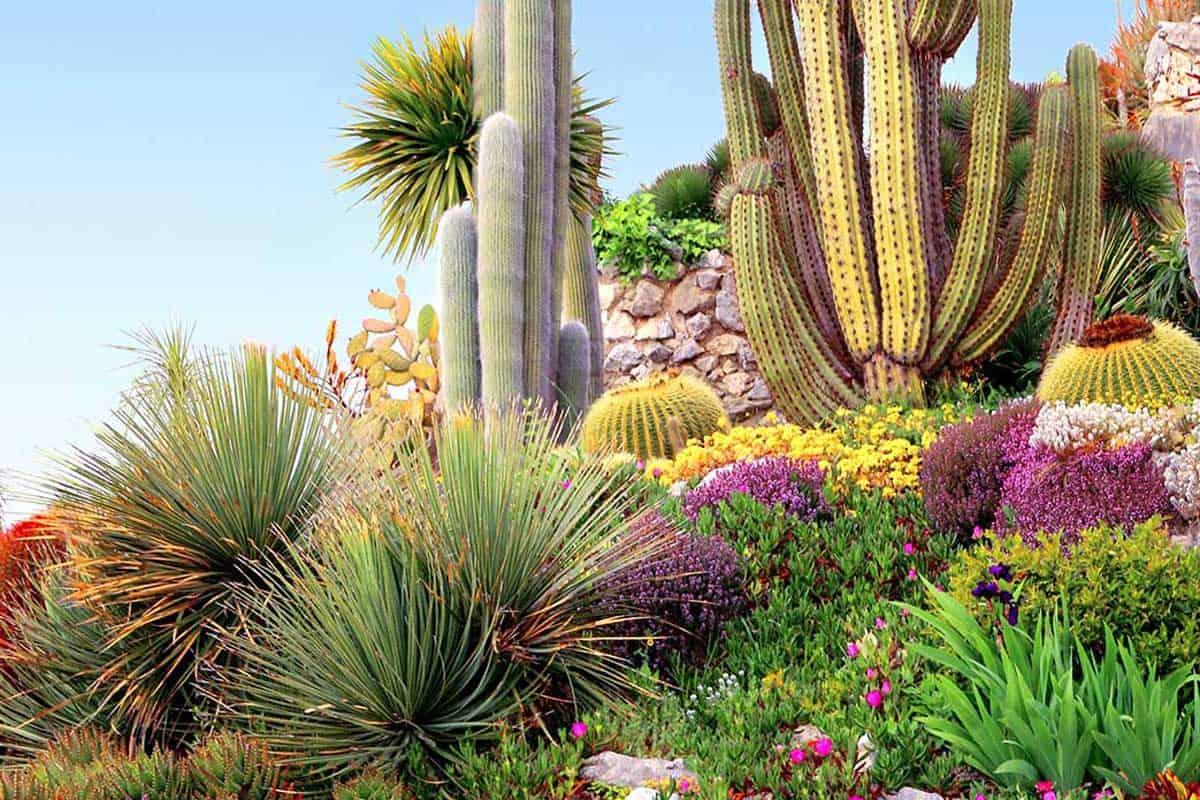 Cacti Landscape