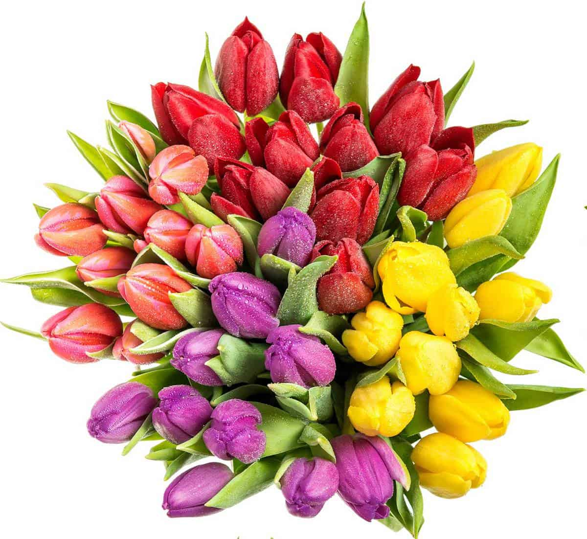 Beautifully arranged assorted color tulips