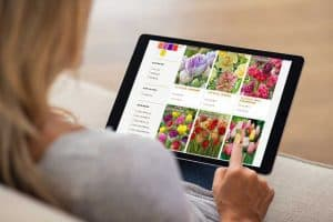 Where to Buy Tulip Bulbs? [Top 40 Online Stores]