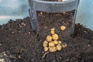 Read more about the article 11 Best Potato Planter Boxes