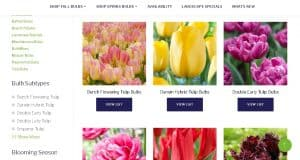ADR Bulbs website product page for tulip bulbs