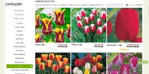 Breck's website product page for tulip bulbs