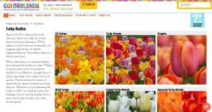 Colorblends website product page for tulip bulbs