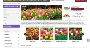 Dutch Bulbs website product page for tulip bulbs