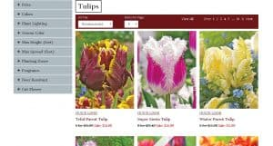 Dutch Gardens website product page for tulip bulbs
