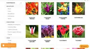 Easy to Grow bulbs website product page for tulip bulbs