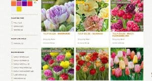 Eden Brothers website product page for tulip bulbs