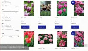 Flowerbulbs Holland website product page for tulip bulbs