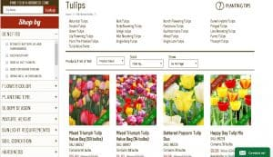 Holland Bulb Farms website product page for tulip bulbs