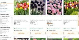 Home Depot website product page for tulip bulbs