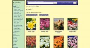 John Scheepers website product page for tulip bulbs