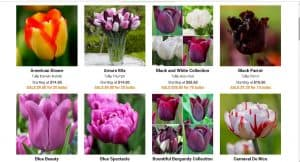 Longfield Gardens website product page for tulip bulbs