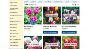 Michigan Bulb Co. website product page for tulip bulbs