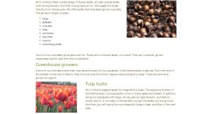 NLG Holland website product page for tulip bulbs