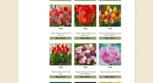 Netherland Bulb Company website product page for tulip bulbs