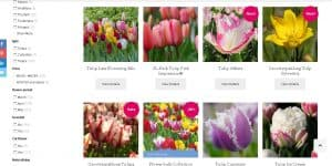 Queen Flower Bulbs website product page for tulip bulbs