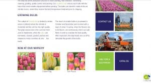 Ruigrok Flowerbulbs website product page for tulip bulbs