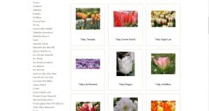 Terra Ceia Farms website product page for tulip bulbs