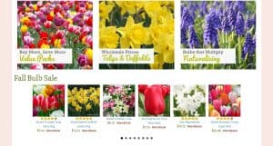 Tulip World website product page for tulip bulbs