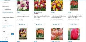 Walmart website product page for tulip bulbs