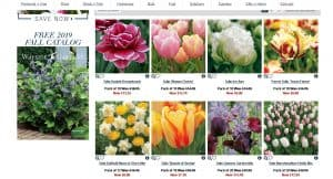 Wayside Gardens website product page for tulip bulbs