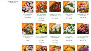 White Flower Farm website product page for tulip bulbs