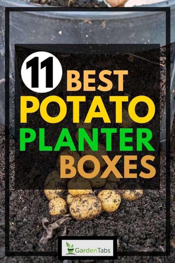 11 Best Potato Planter Boxes