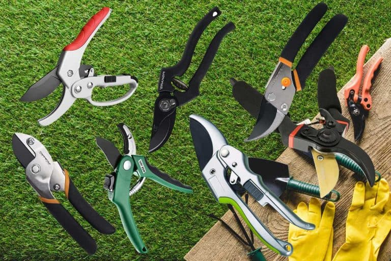 Best Garden Edging Shears [10 Options Every Gardner Should Know]