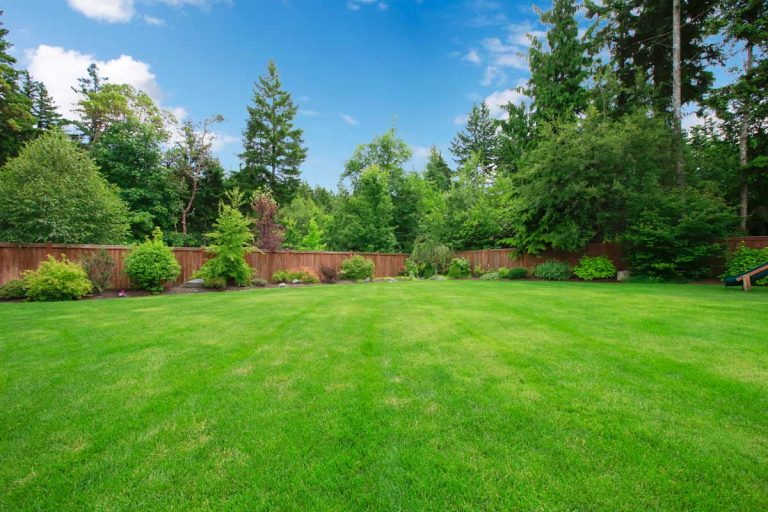 Should You Dethatch or Aerate Lawn First?