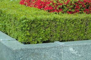 L-Shaped and Corner Planter Boxes: What Gardeners Need to Know