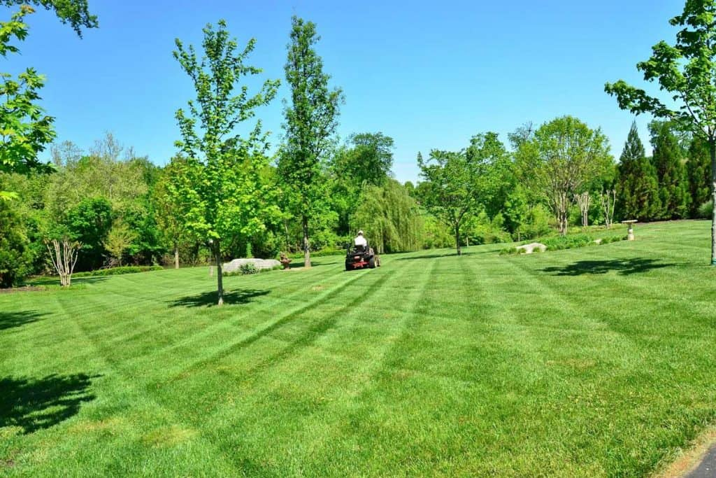 Man-mowing-gold-course-in-lawnmower