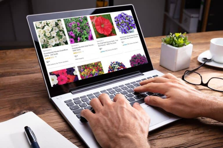 Where to Buy Petunia Seeds (Top 30 online stores)