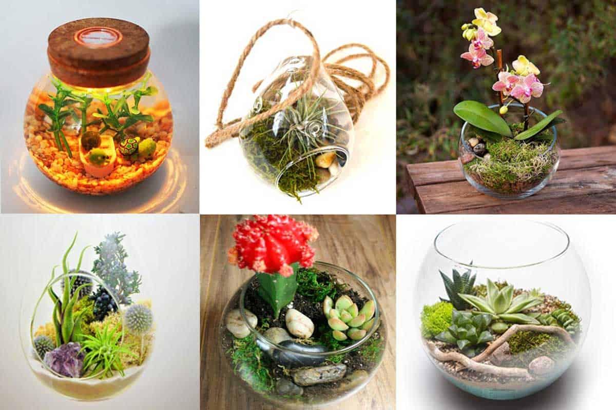 10 Moss Terrarium Kits For A Gorgeous Indoor Garden Garden Tabs