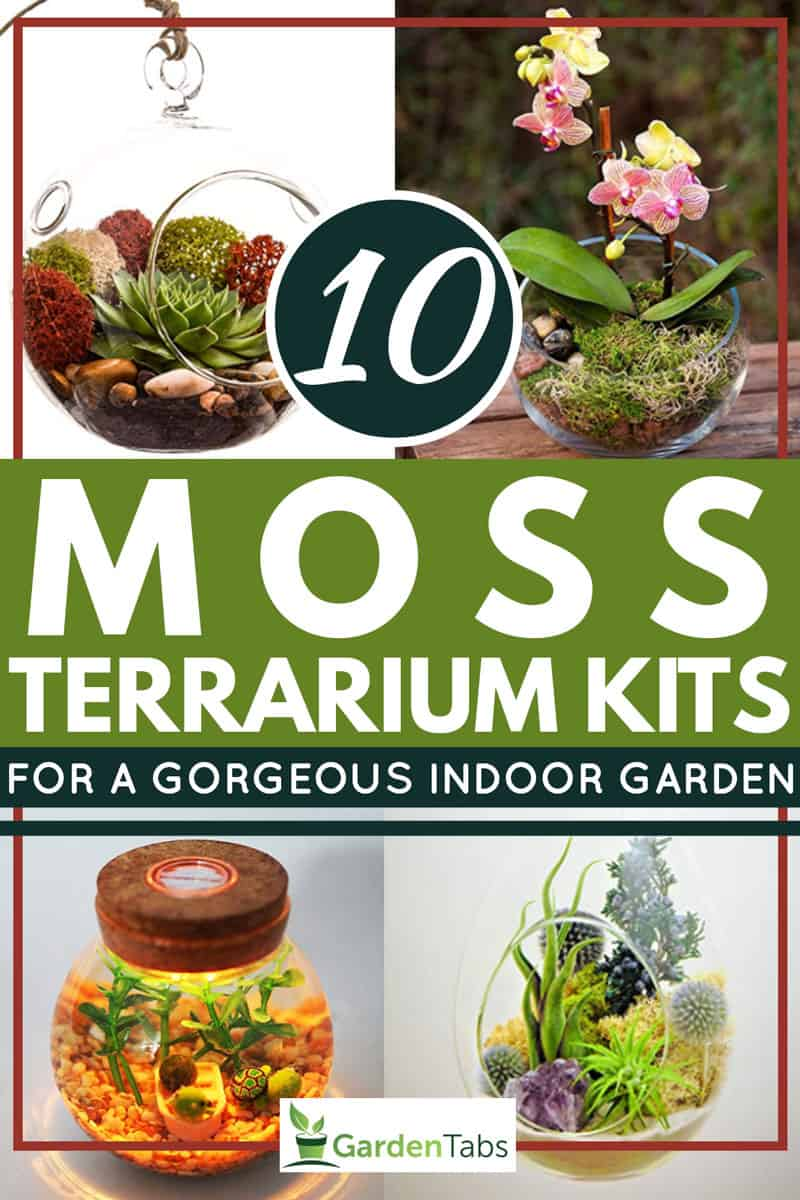 10 Moss Terrarium Kits For A Gorgeous Indoor Garden