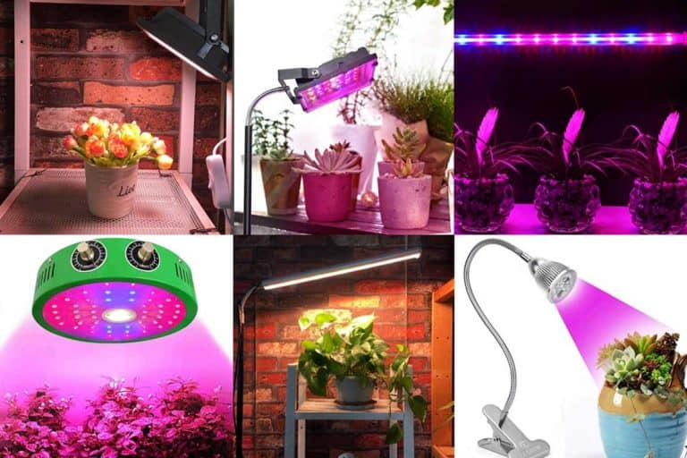 12 Best Heat Lamps for Plants