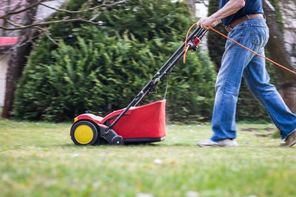 A gardener using a verticutter to cut his lawn