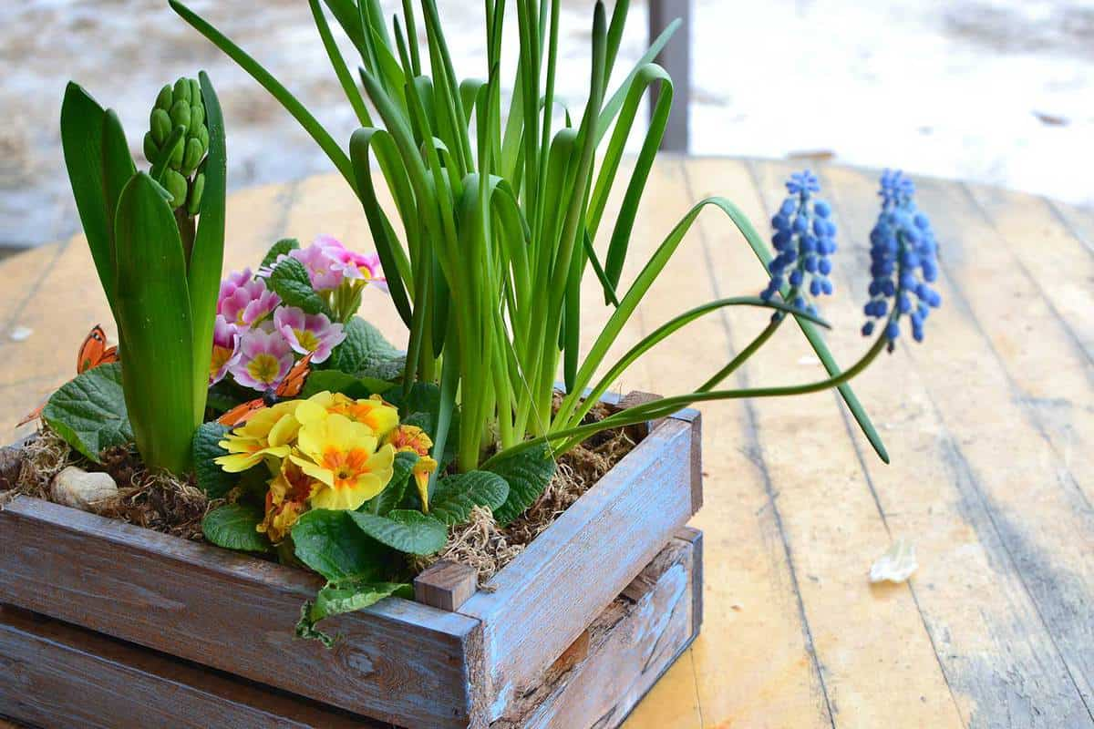 Assortment of plants and flowers in a blue painted wooden box