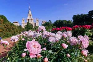 Read more about the article How to Grow Peonies: The Complete Guide