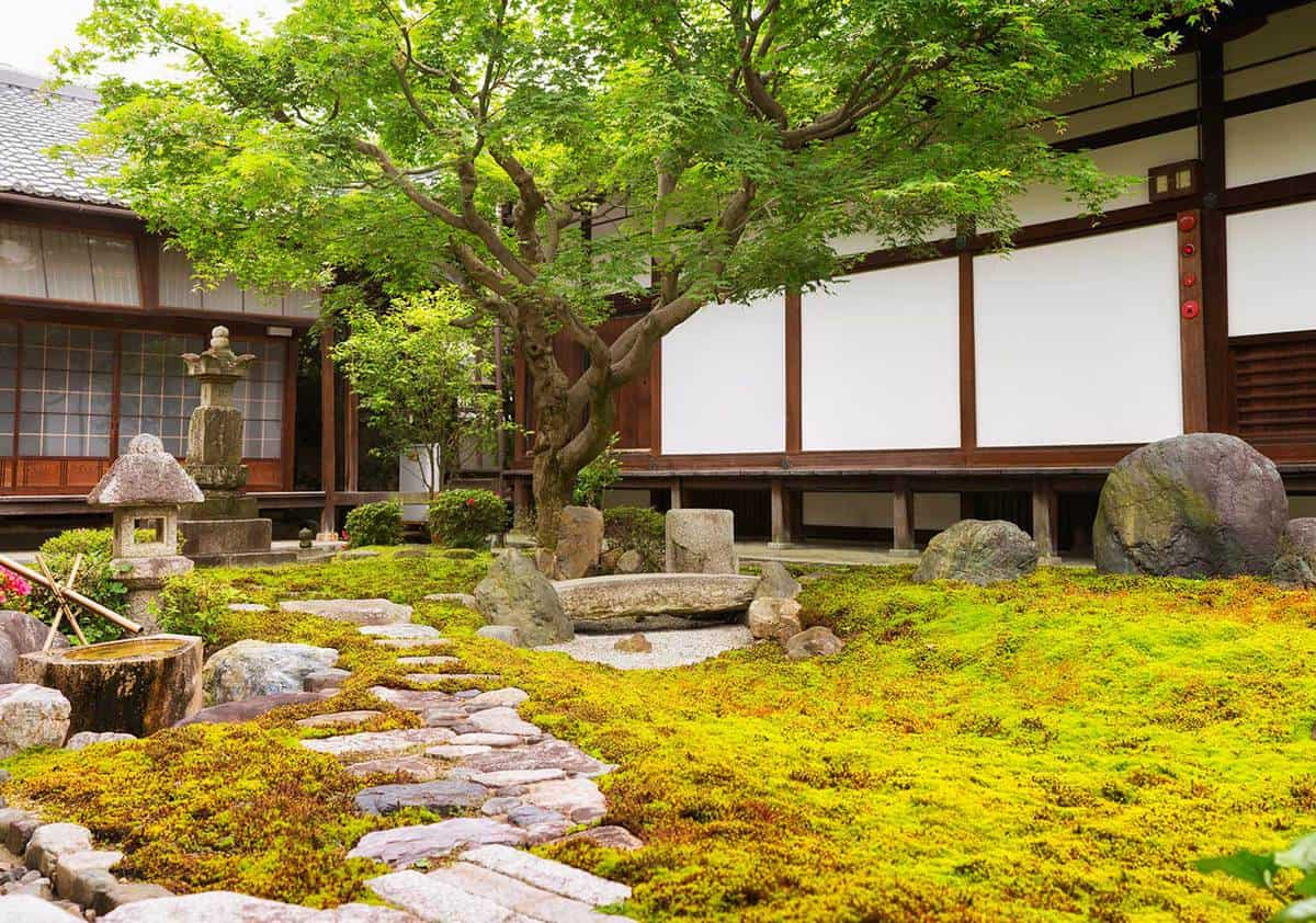 Formal rock and moss garden at japanese buddhist temple with a large japanese maple growing at the end of a footpath