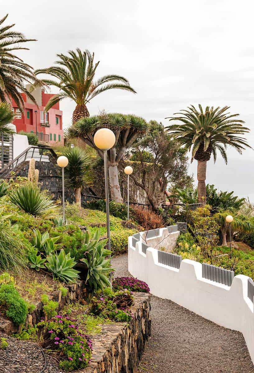 Garden with palm trees on the island of Tenerife on a sunny day