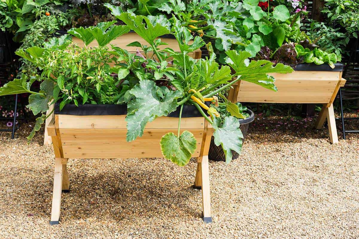Green vegetable plants growing in wooden pot container