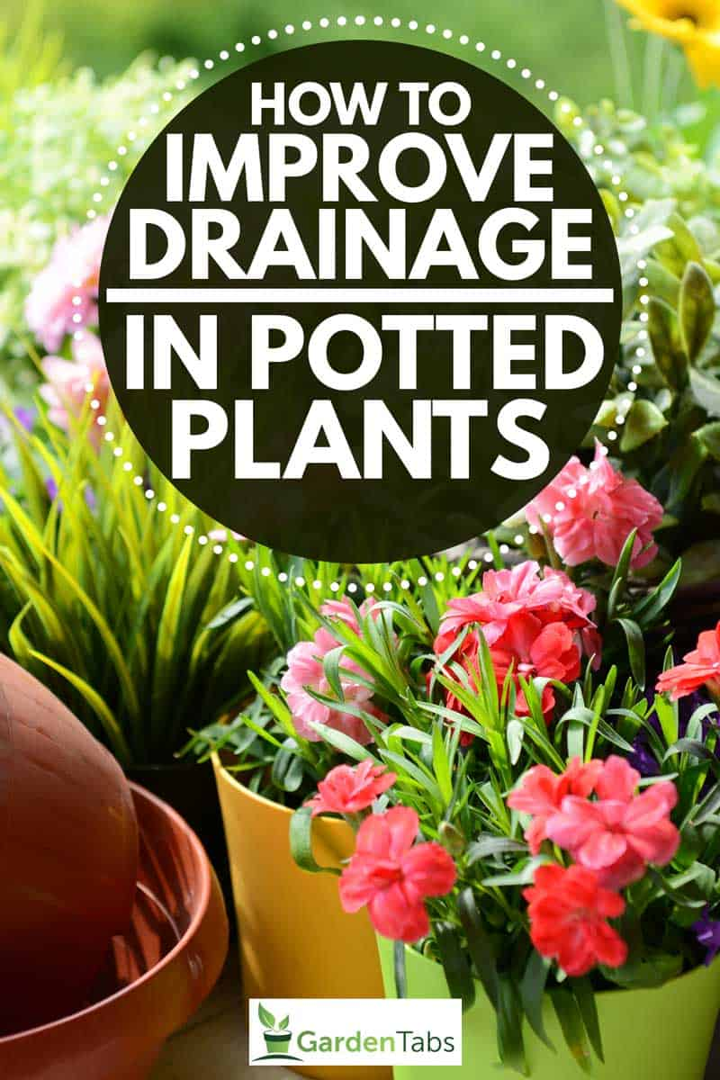 How To Improve Drainage In Potted Plants