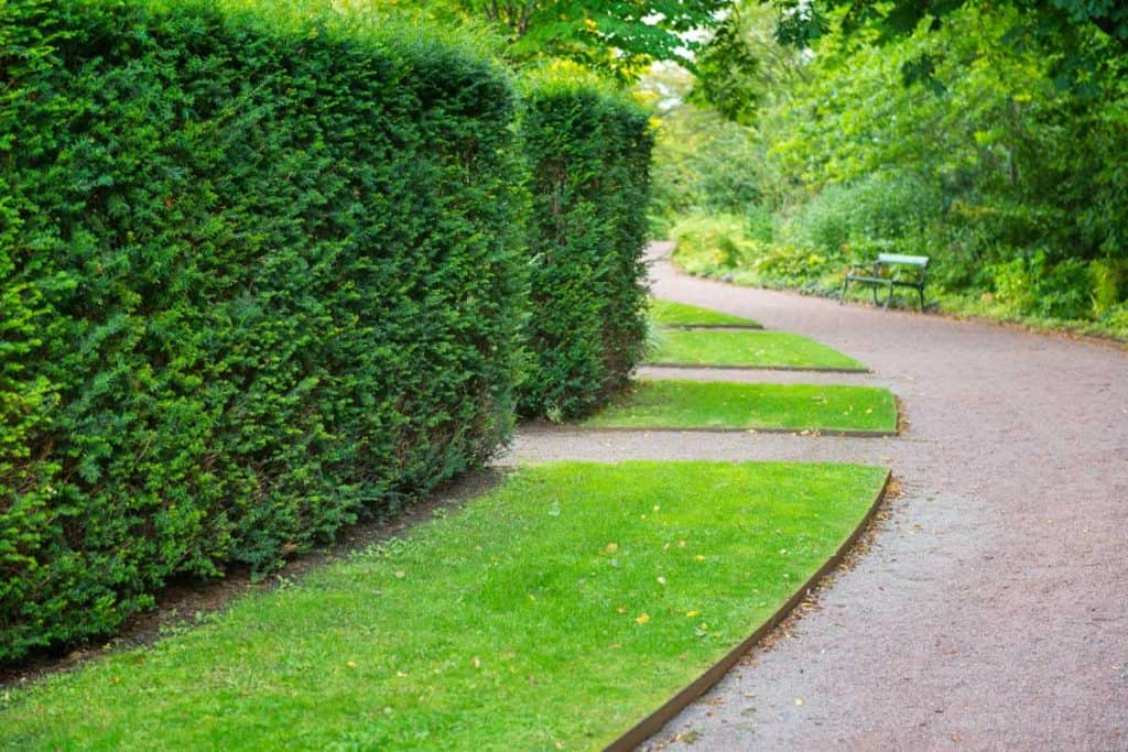 Lawn edging with concrete path and huge hedge row