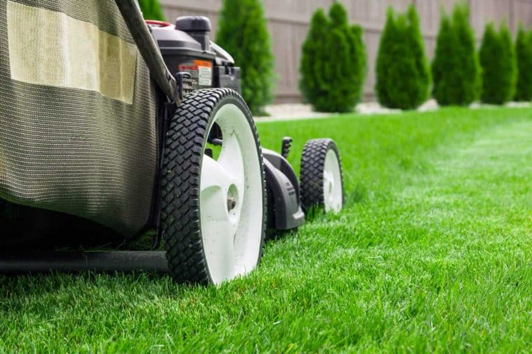 Can You Mow Over Lawn Edging? [Mow Strips 101]