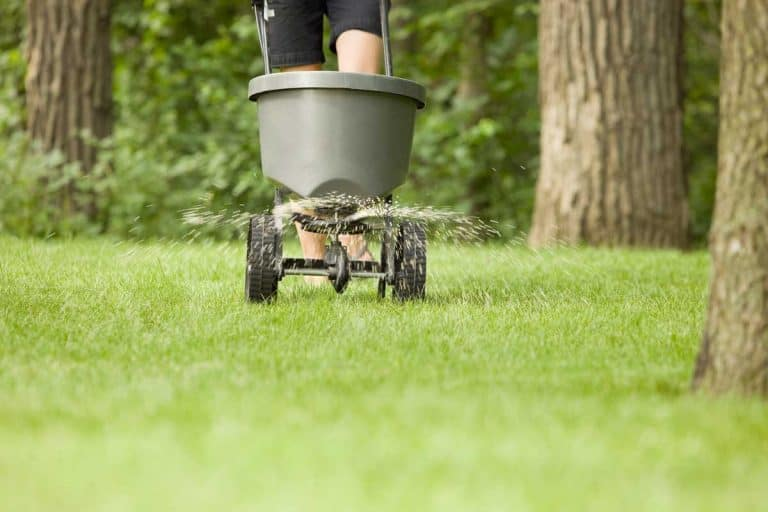 Can You Over Fertilize a Lawn?