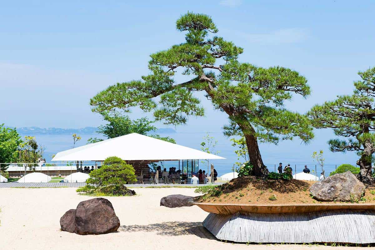 Japanese-style garden with large bonsai trees